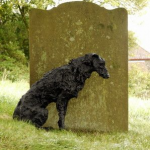 wolfhound Picture